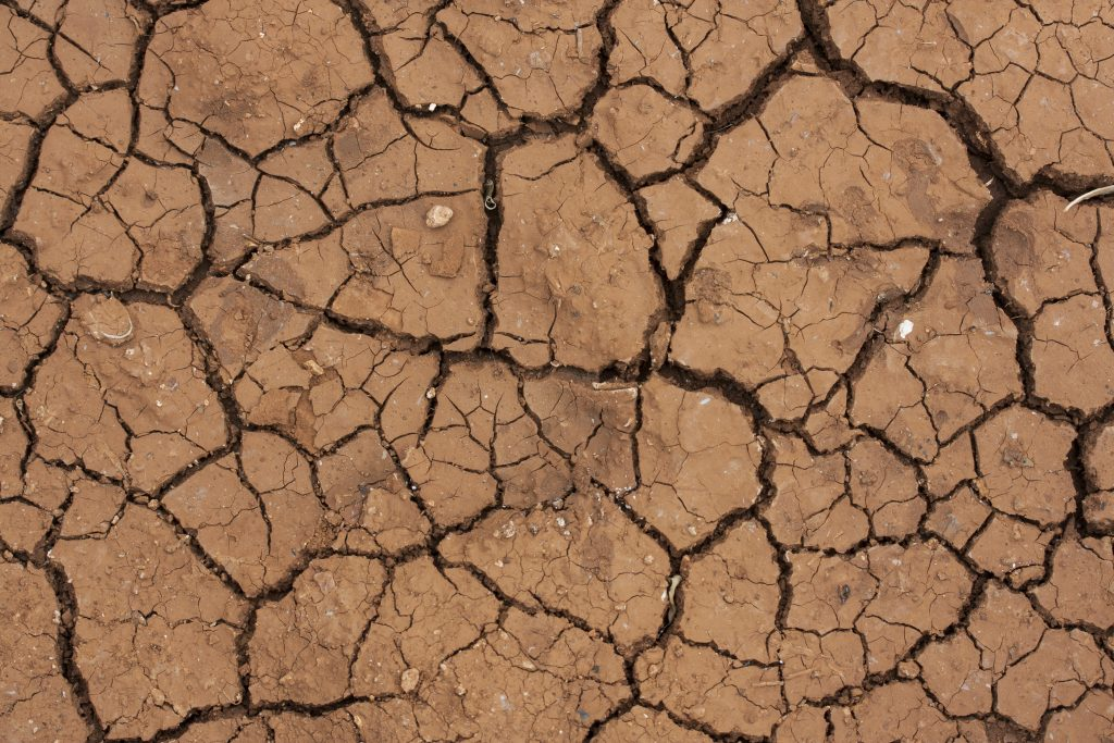 Drought-Stress Damage